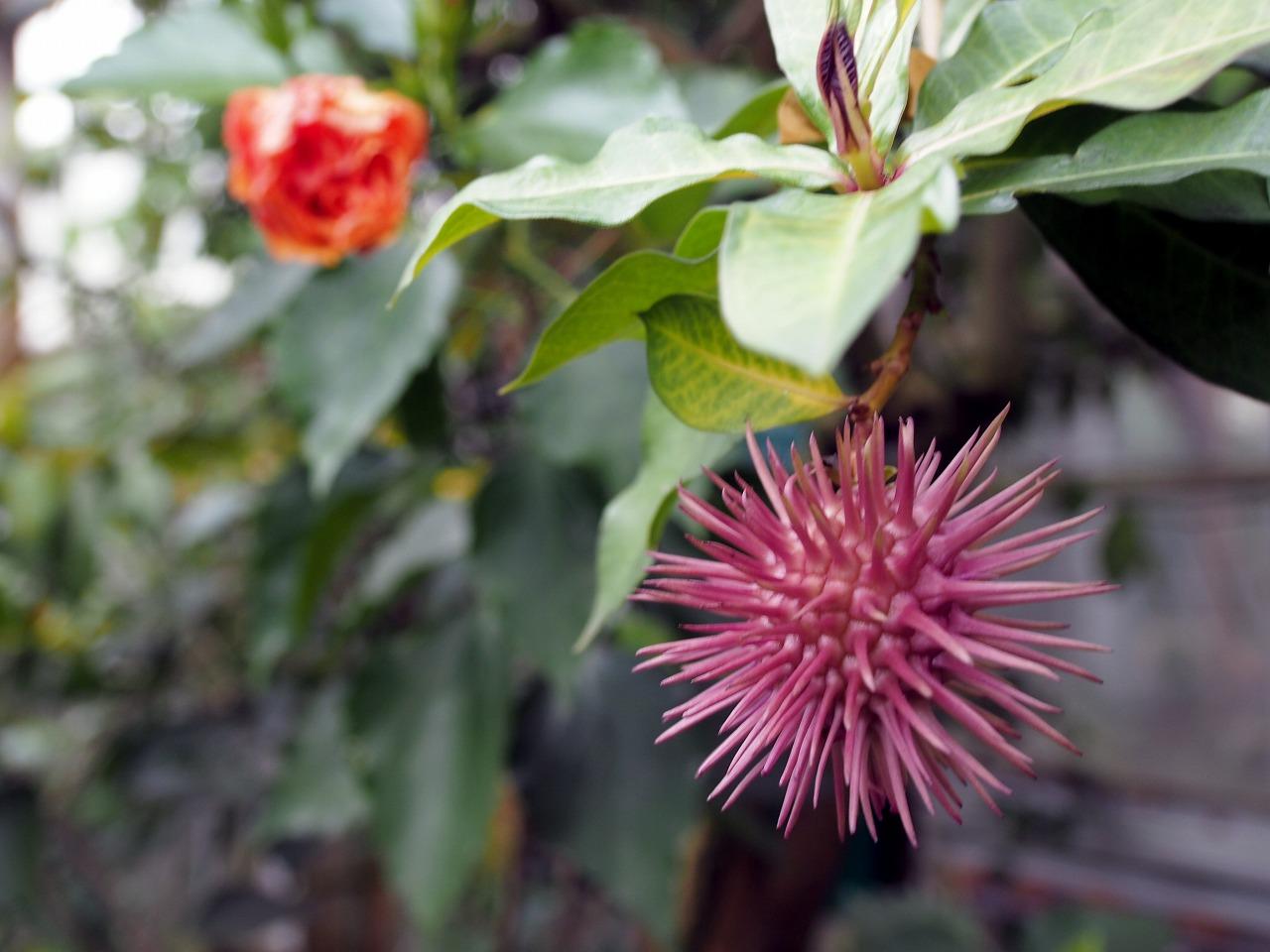 BotanicalGarden139_20141115.jpg