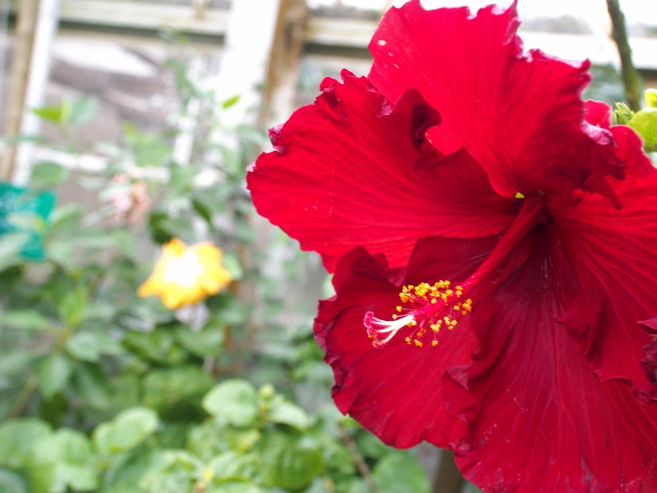 BotanicalGarden142_20141115.jpg