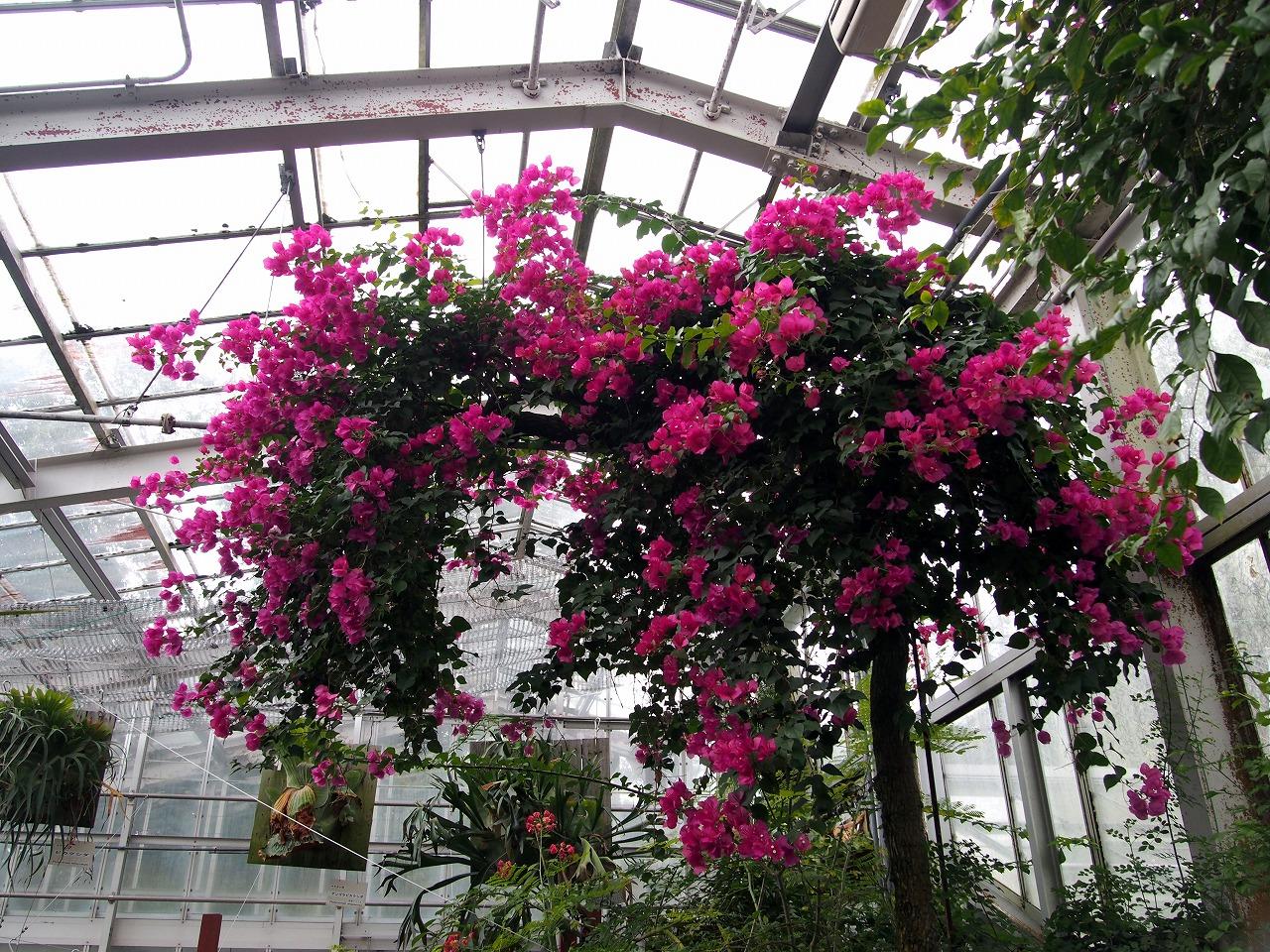 BotanicalGarden144_20141115.jpg
