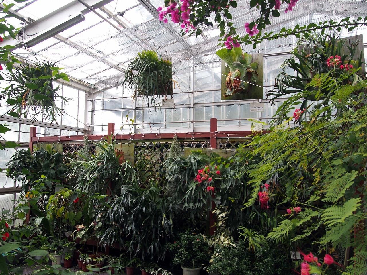 BotanicalGarden145_20141115.jpg
