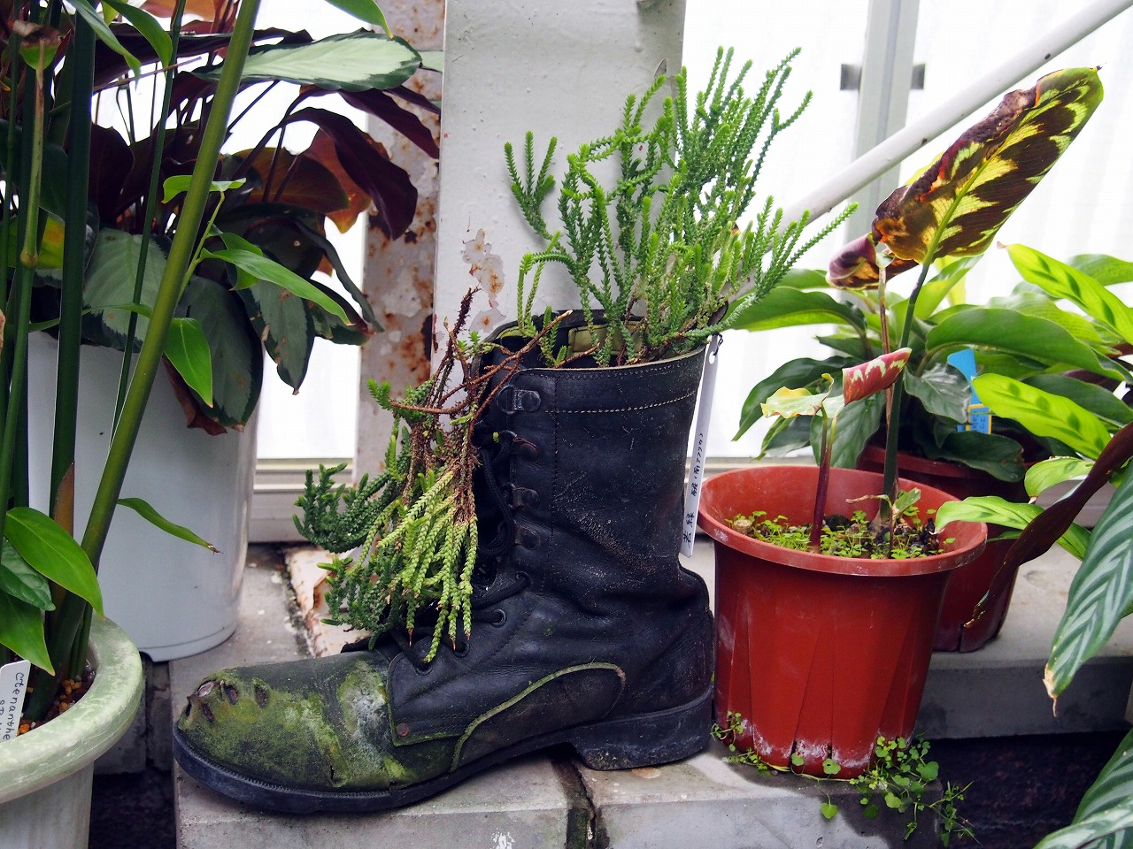 BotanicalGarden146_20141115.jpg