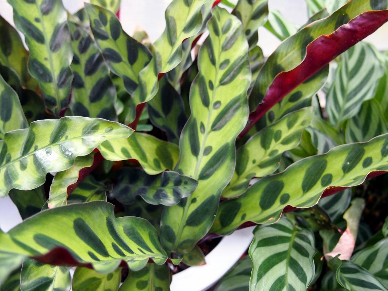 BotanicalGarden149_20141115.jpg