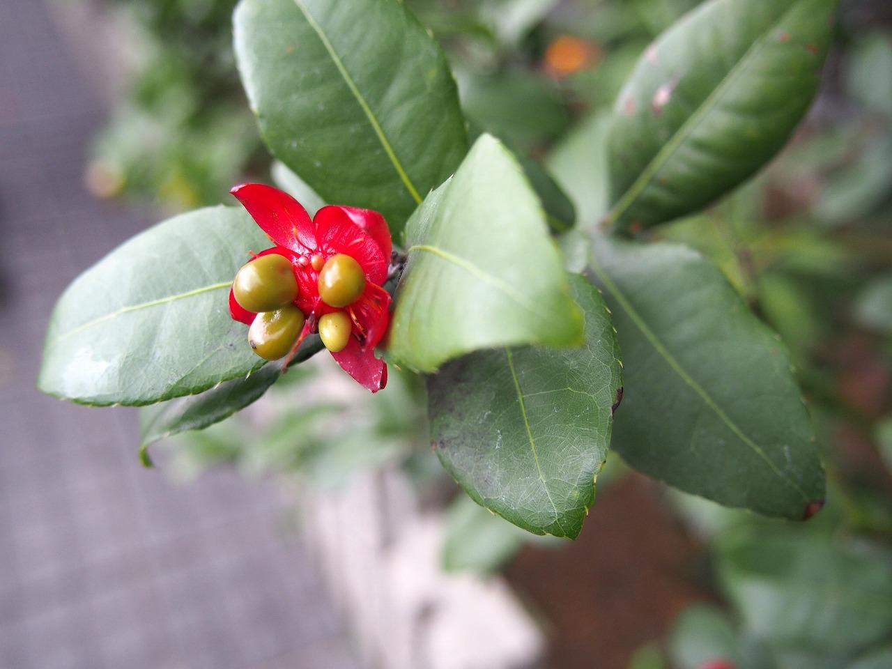 BotanicalGarden153_20141115.jpg