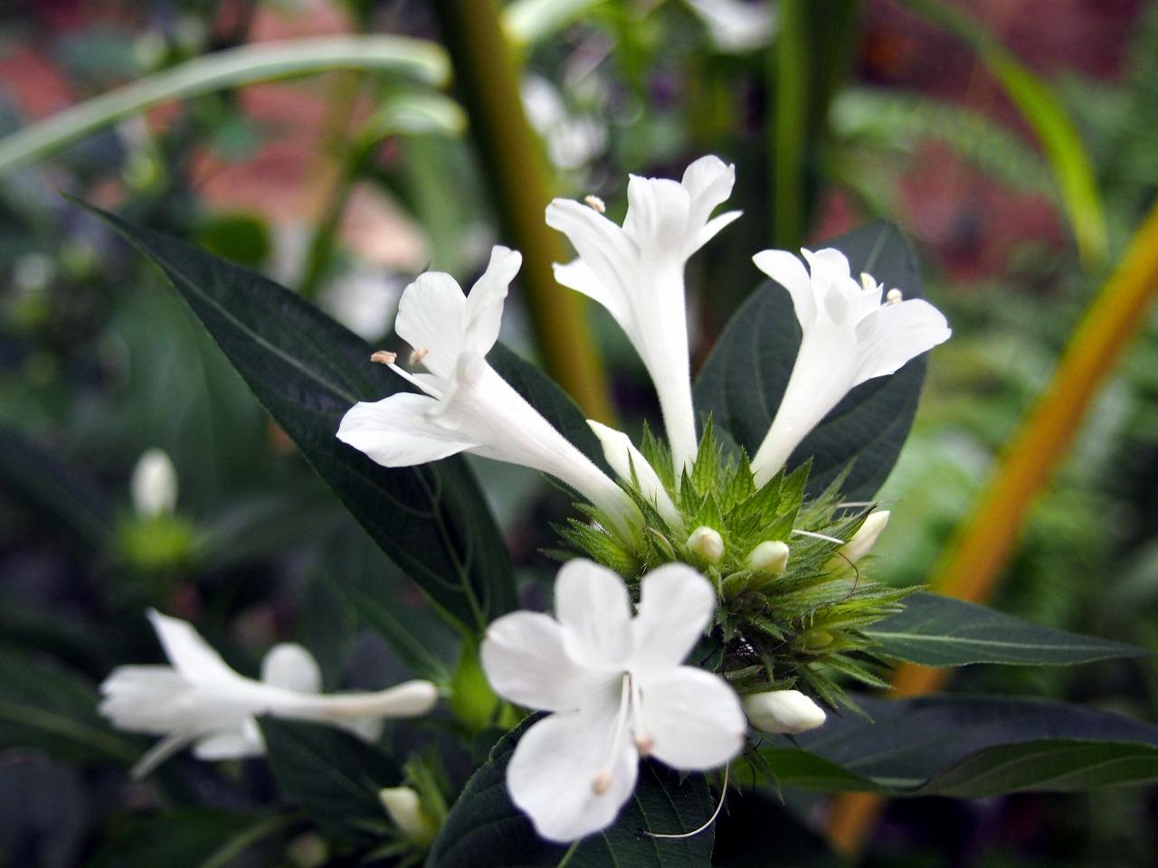 BotanicalGarden157_20141115.jpg