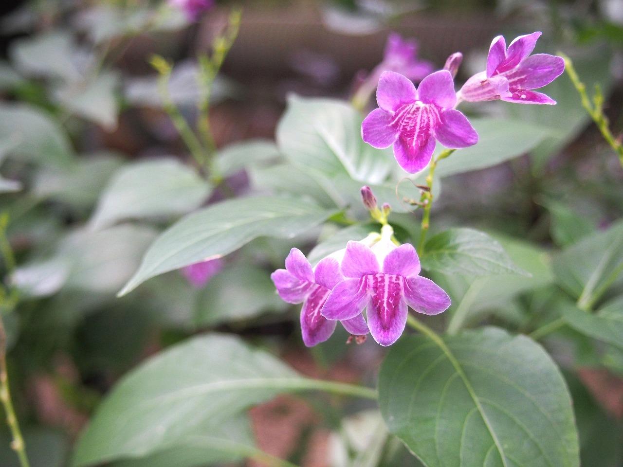 BotanicalGarden159_20141115.jpg