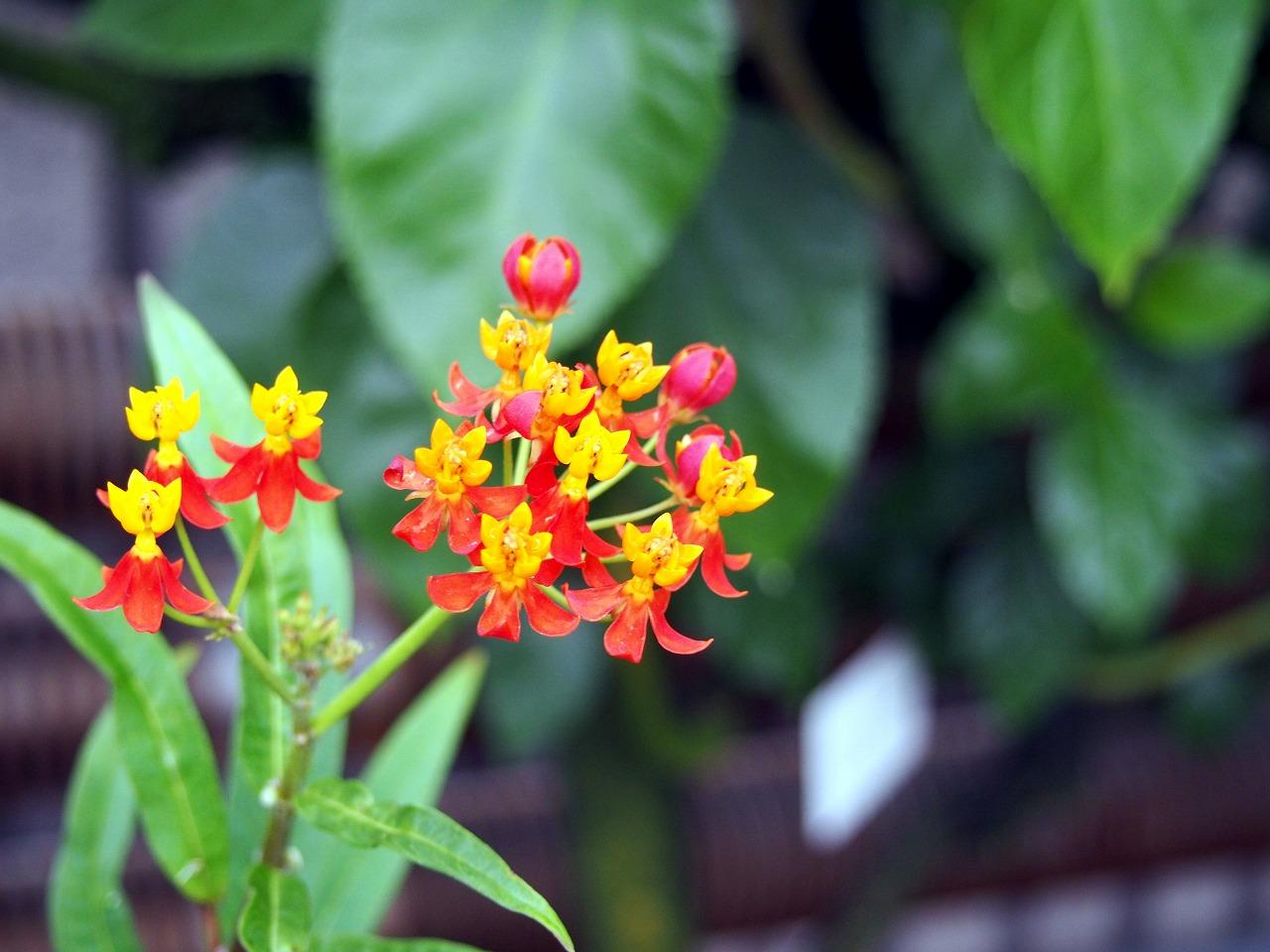 BotanicalGarden164_20141115.jpg