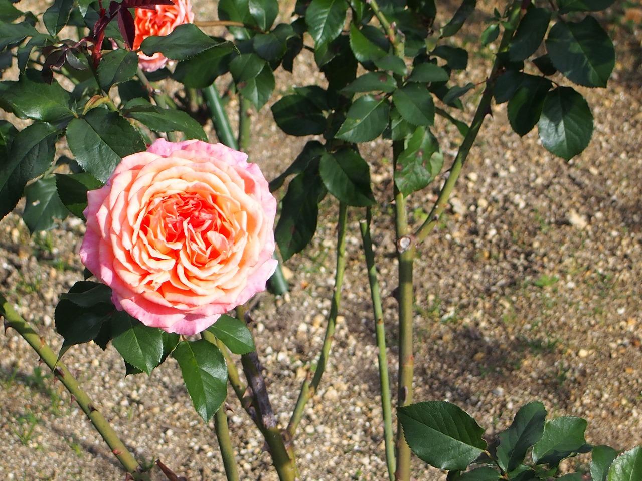 BotanicalGarden168_20141115.jpg