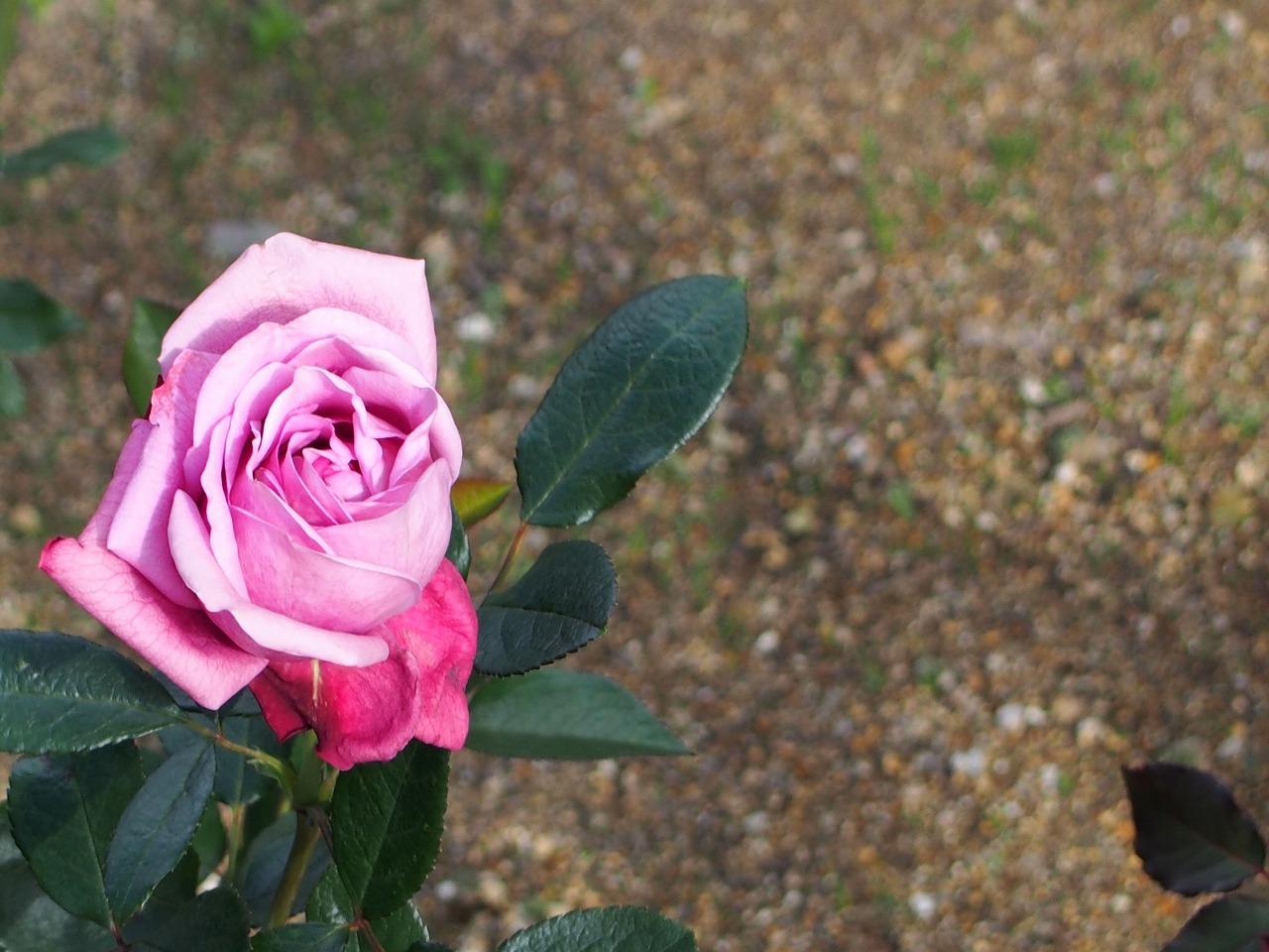 BotanicalGarden169_20141115.jpg