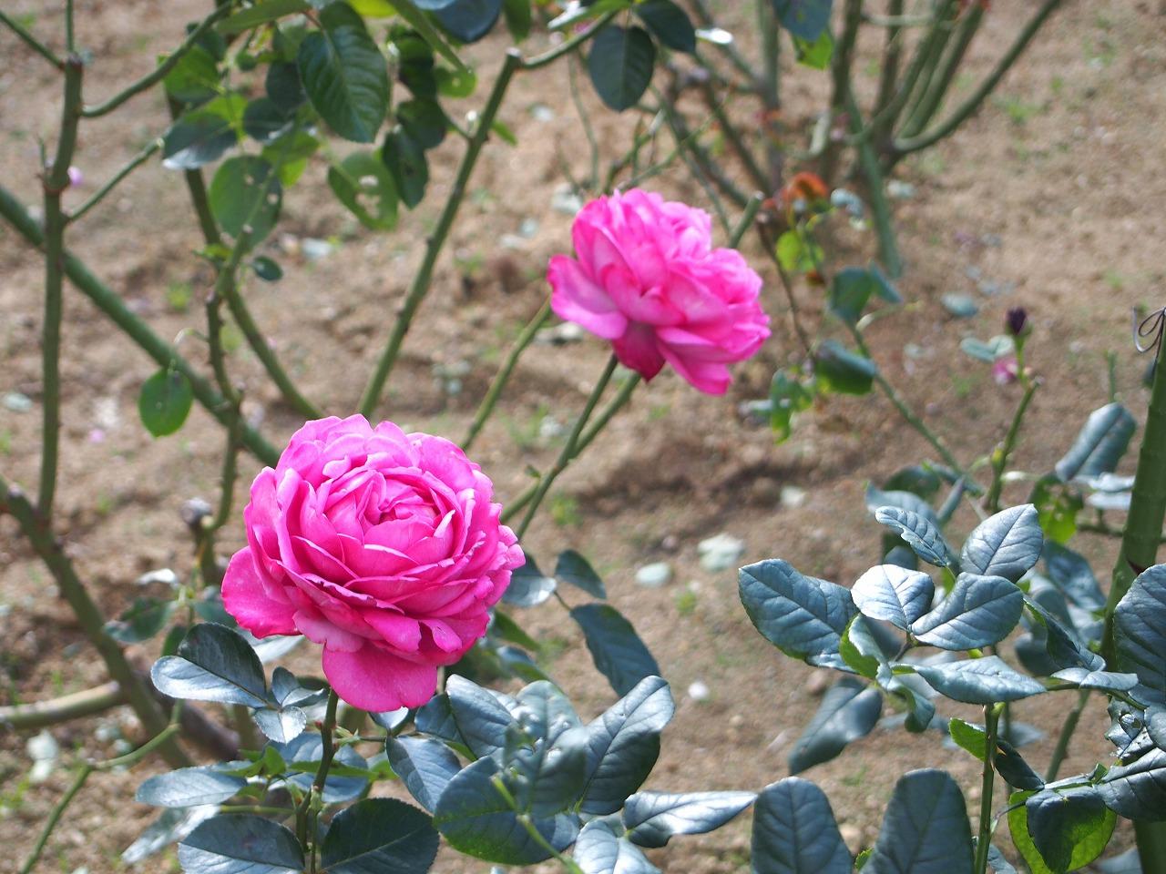 BotanicalGarden172_20141115.jpg