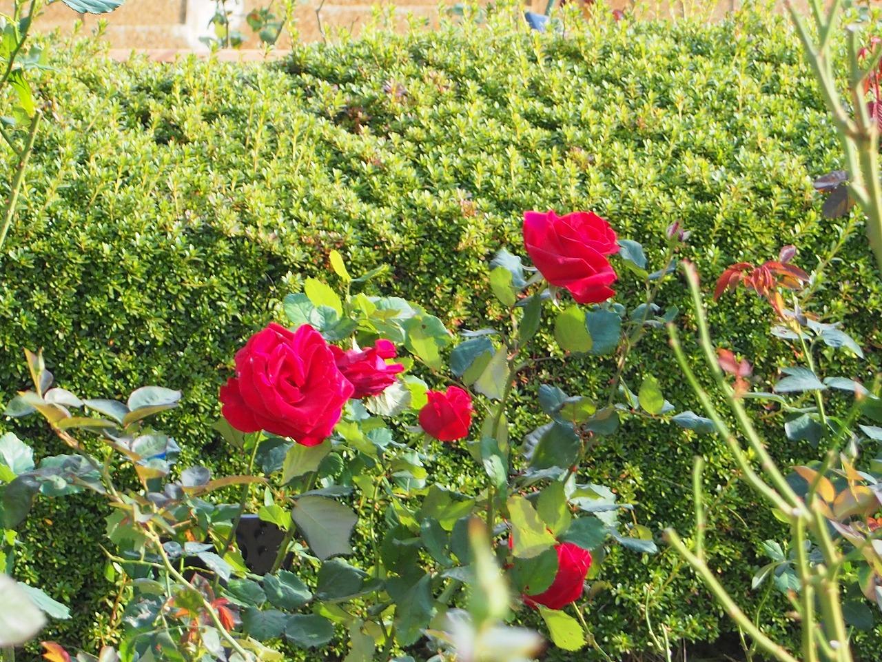 BotanicalGarden173_20141115.jpg