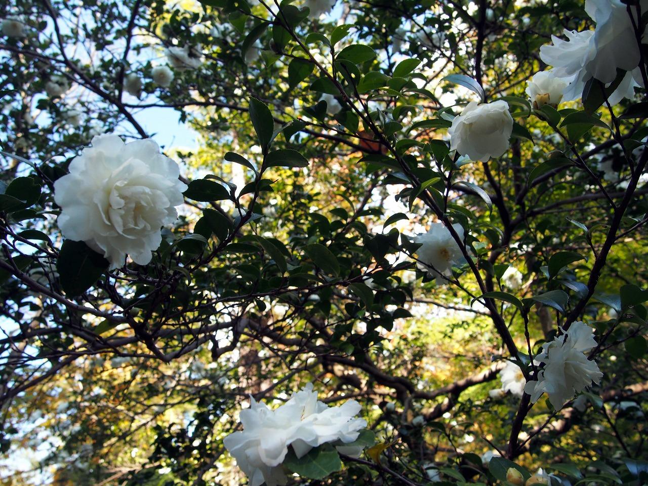 BotanicalGarden20_20141115.jpg