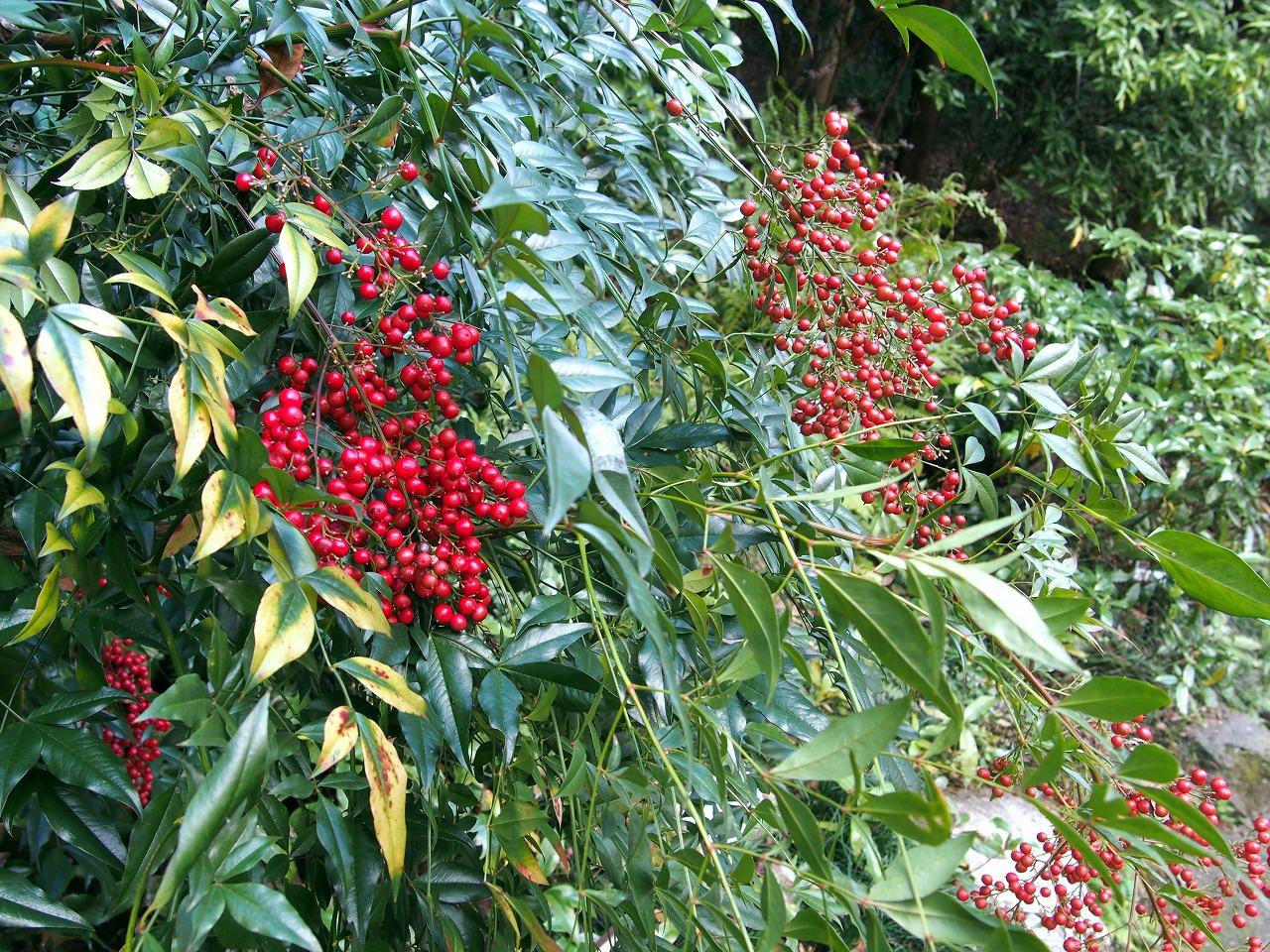 BotanicalGarden23_20141115.jpg
