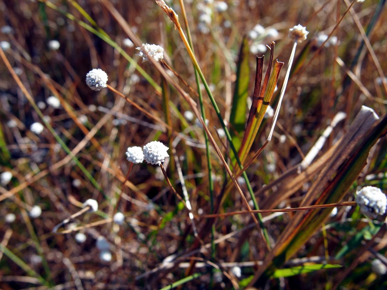 BotanicalGarden36_20141115.jpg