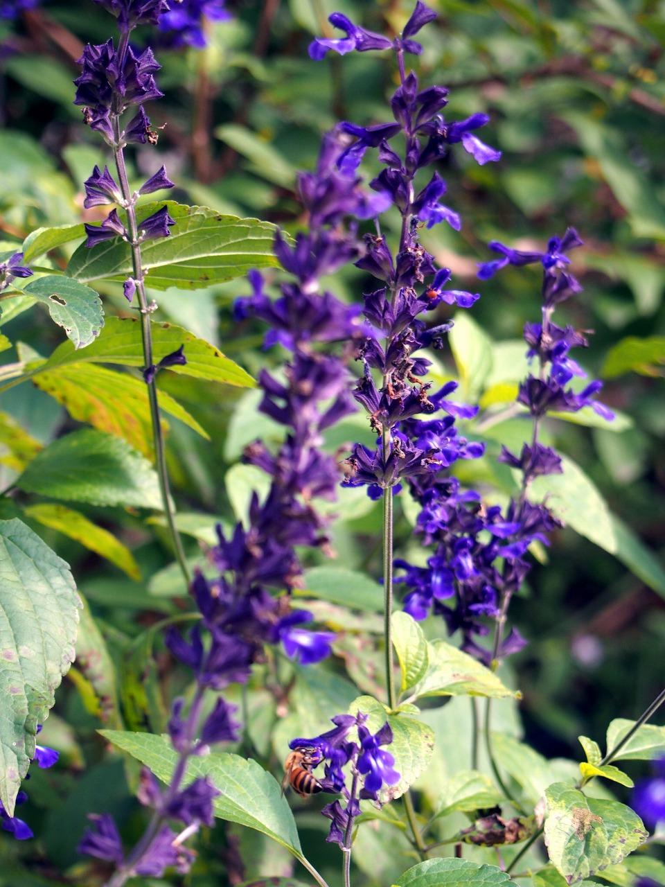 BotanicalGarden43_20141115.jpg