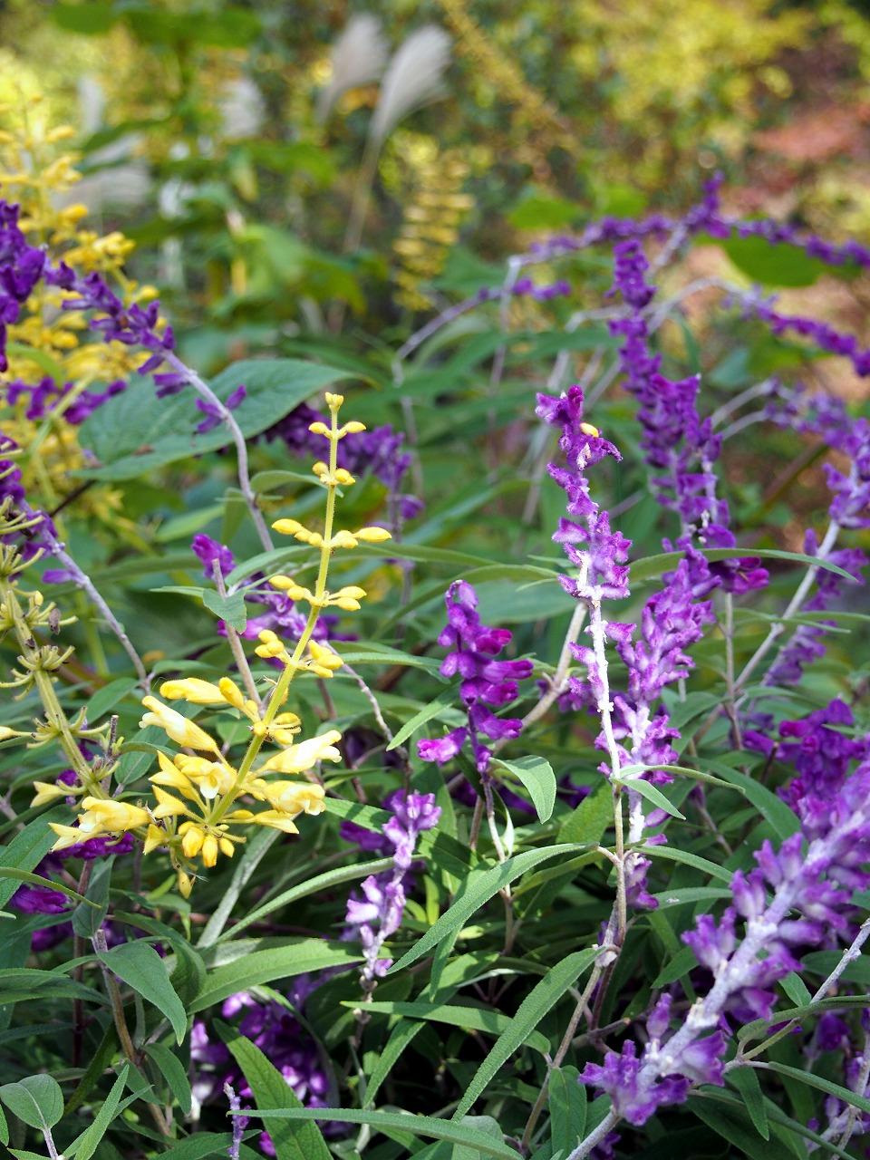 BotanicalGarden45_20141115.jpg