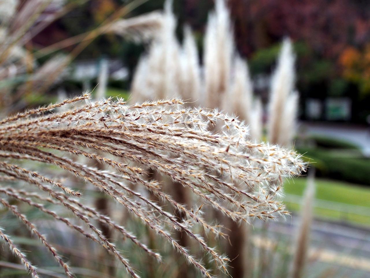 BotanicalGarden58_20141115.jpg