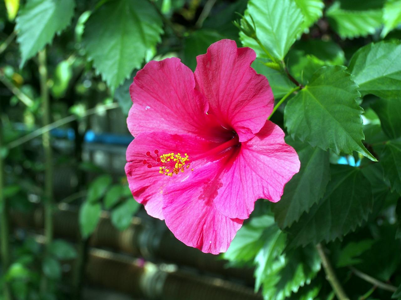 BotanicalGarden69_20141115.jpg