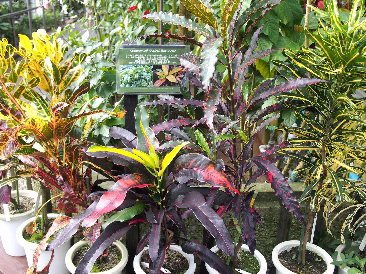 BotanicalGarden72_20141115.jpg