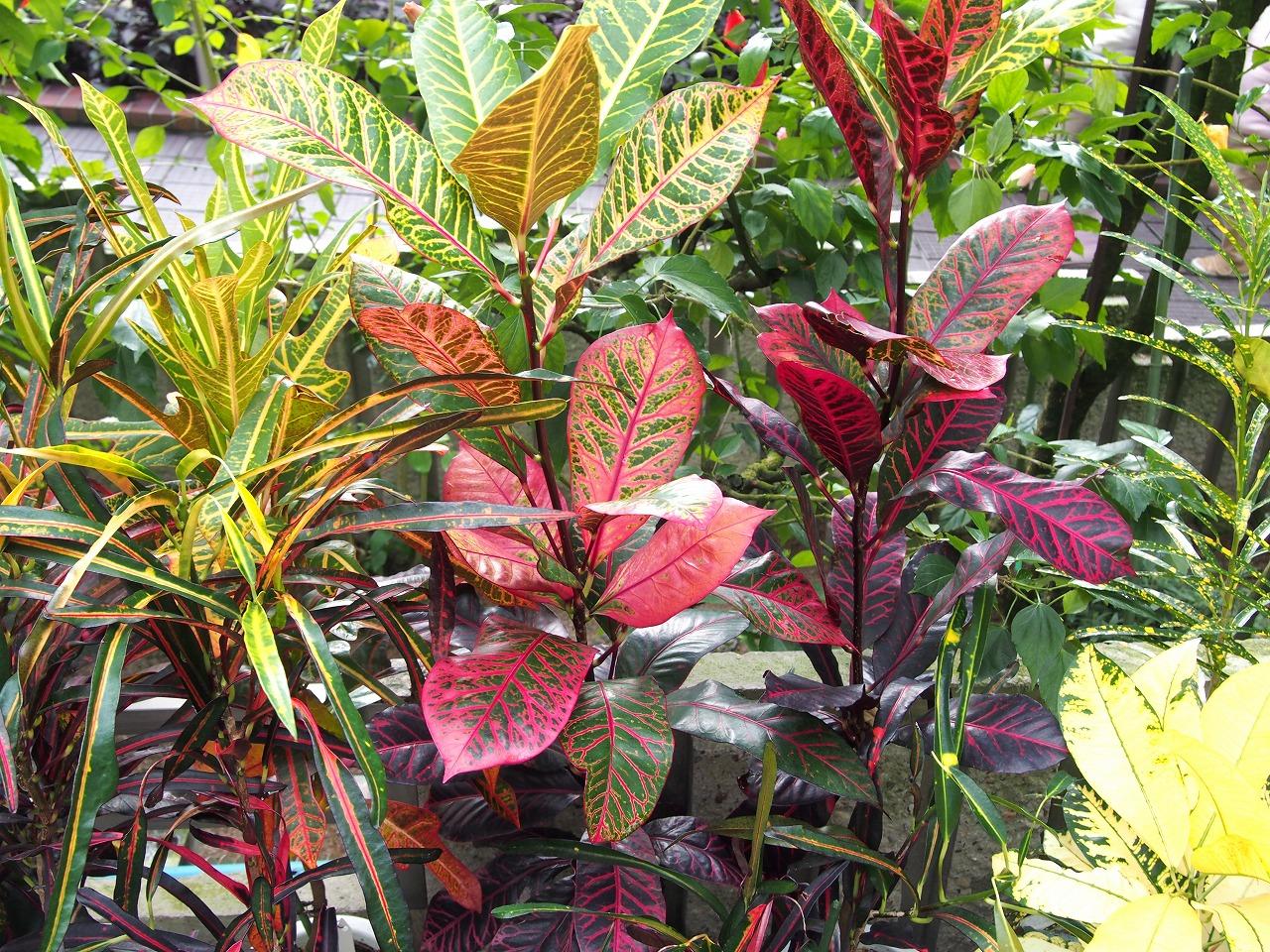 BotanicalGarden73_20141115.jpg