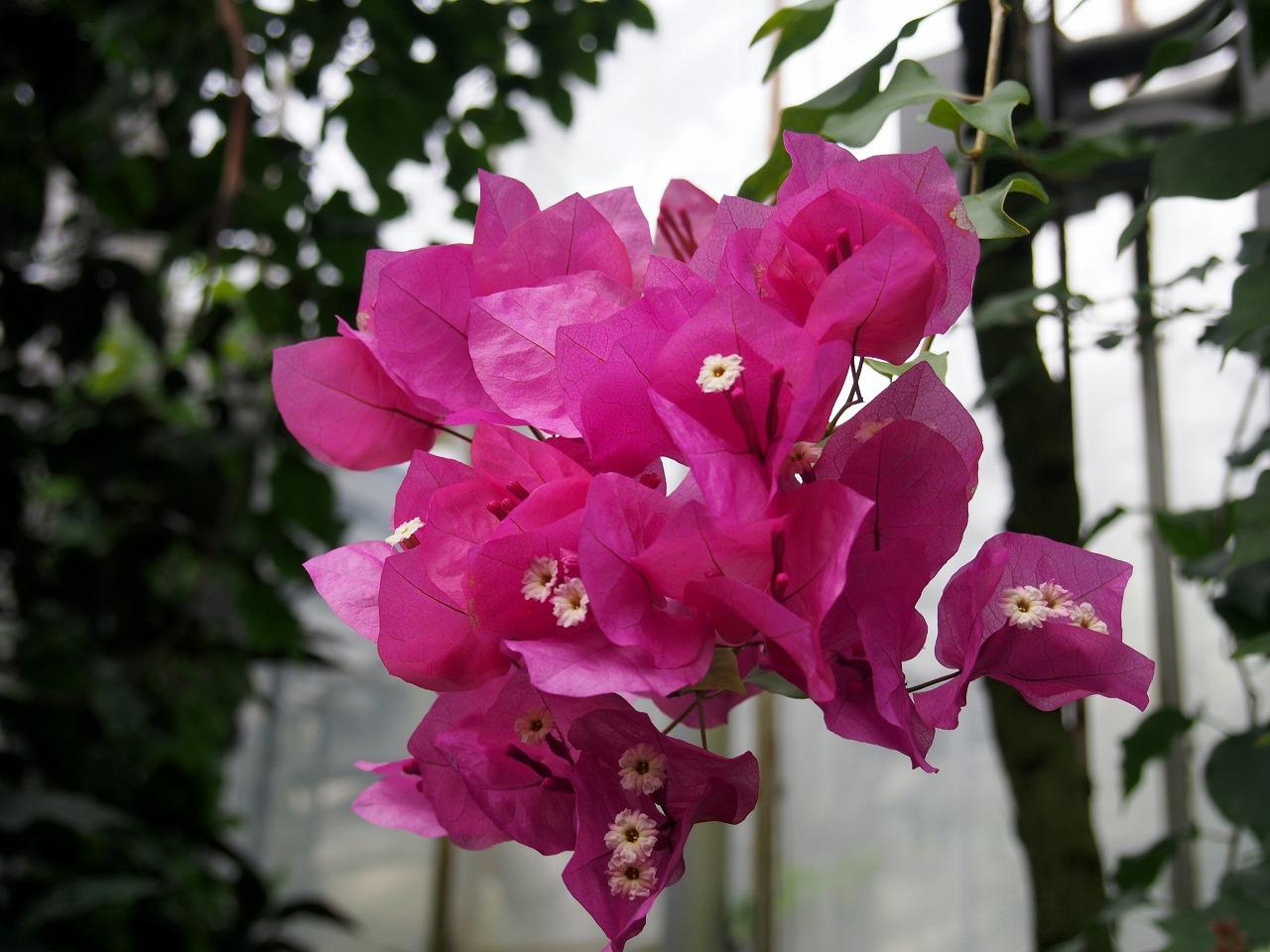 BotanicalGarden75_20141115.jpg