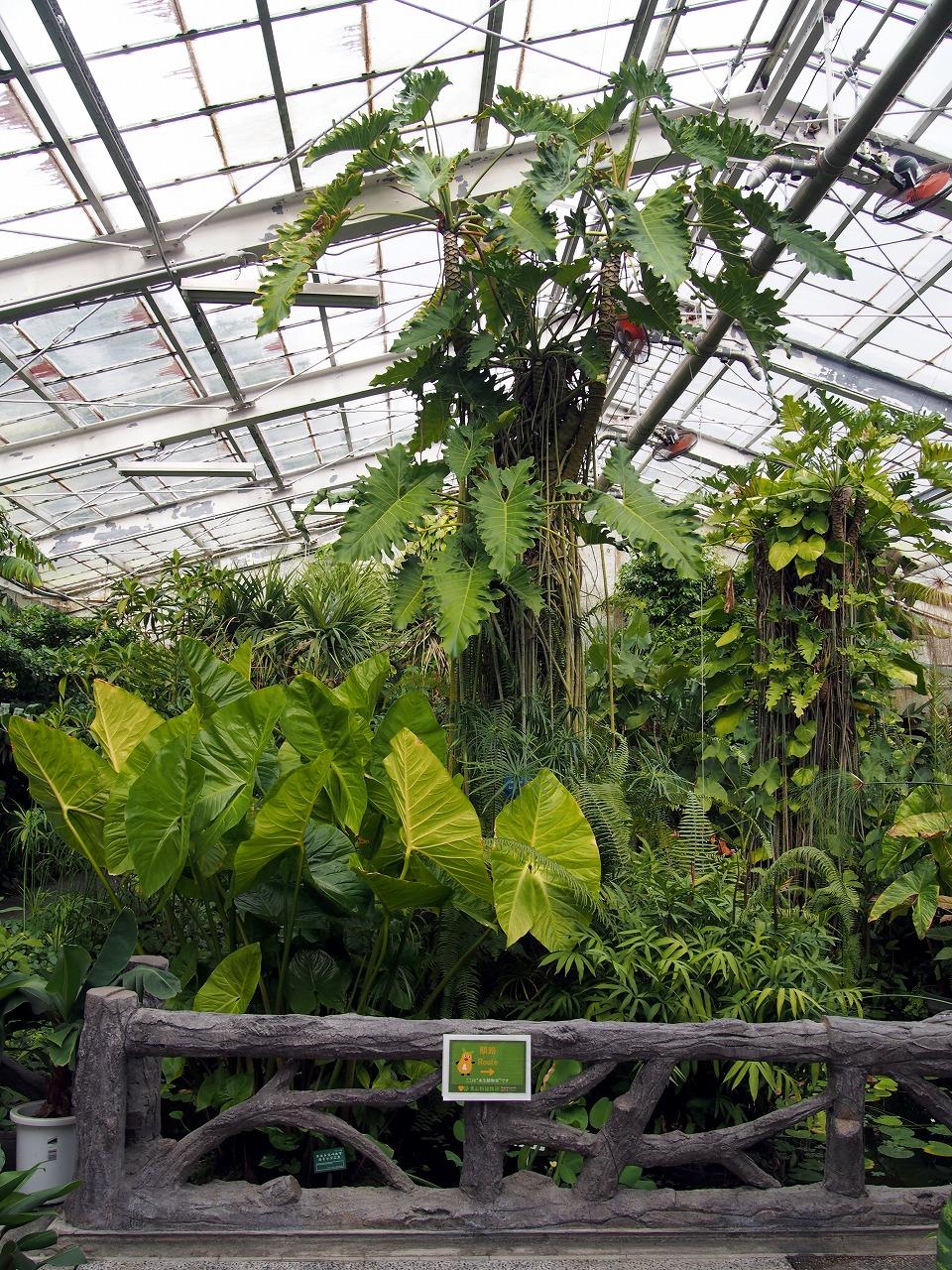 BotanicalGarden76_20141115.jpg