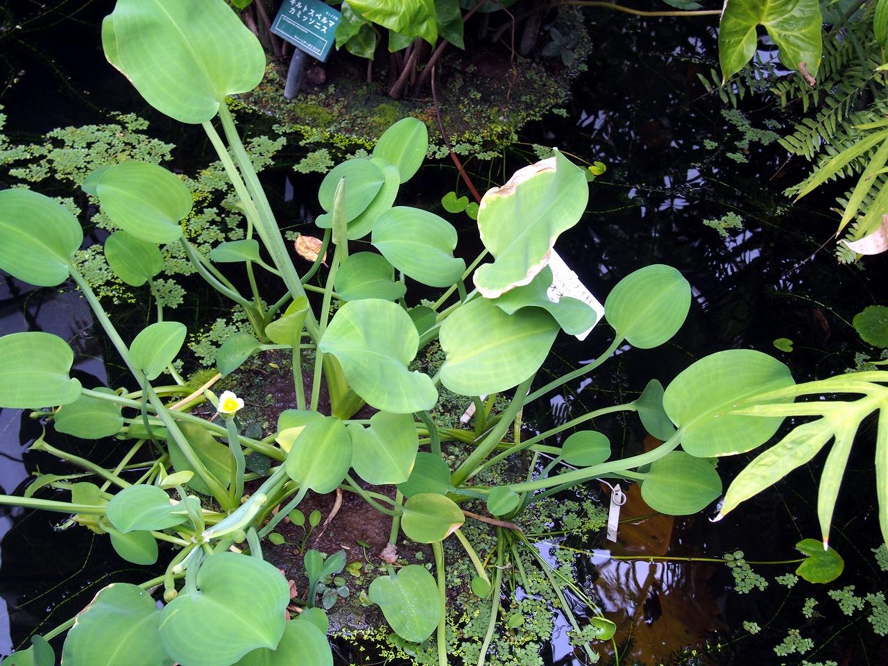 BotanicalGarden77_20141115.jpg