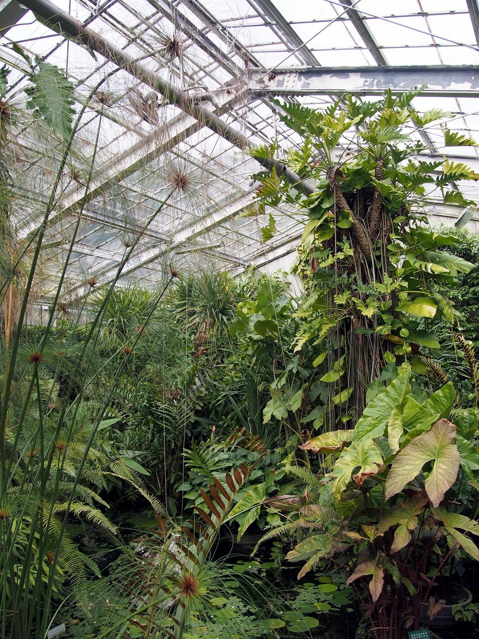 BotanicalGarden79_20141115.jpg