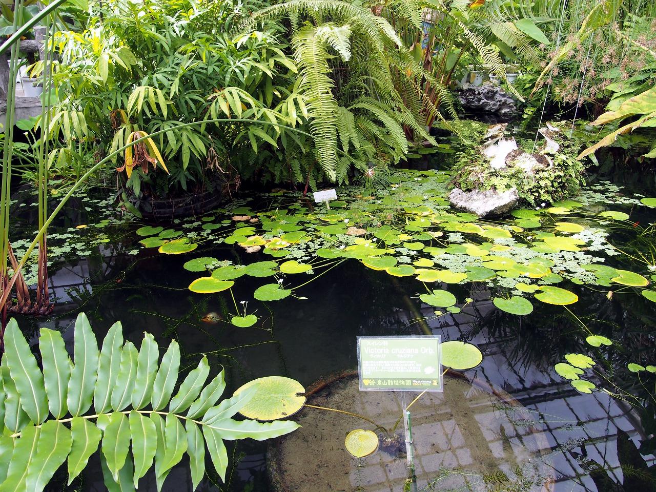 BotanicalGarden80_20141115.jpg