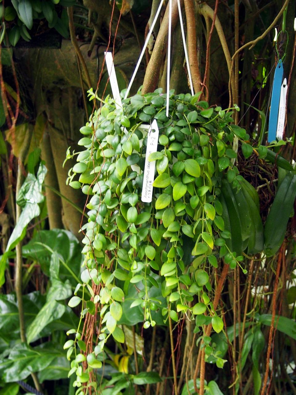 BotanicalGarden90_20141115.jpg