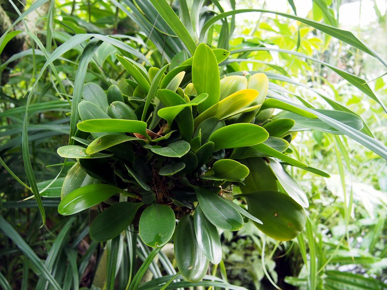 BotanicalGarden91_20141115.jpg