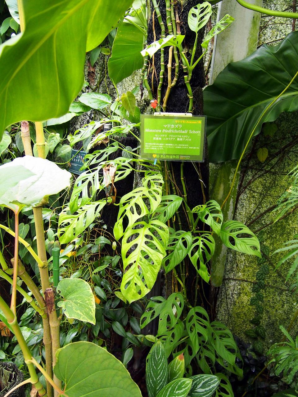 BotanicalGarden95_20141115.jpg