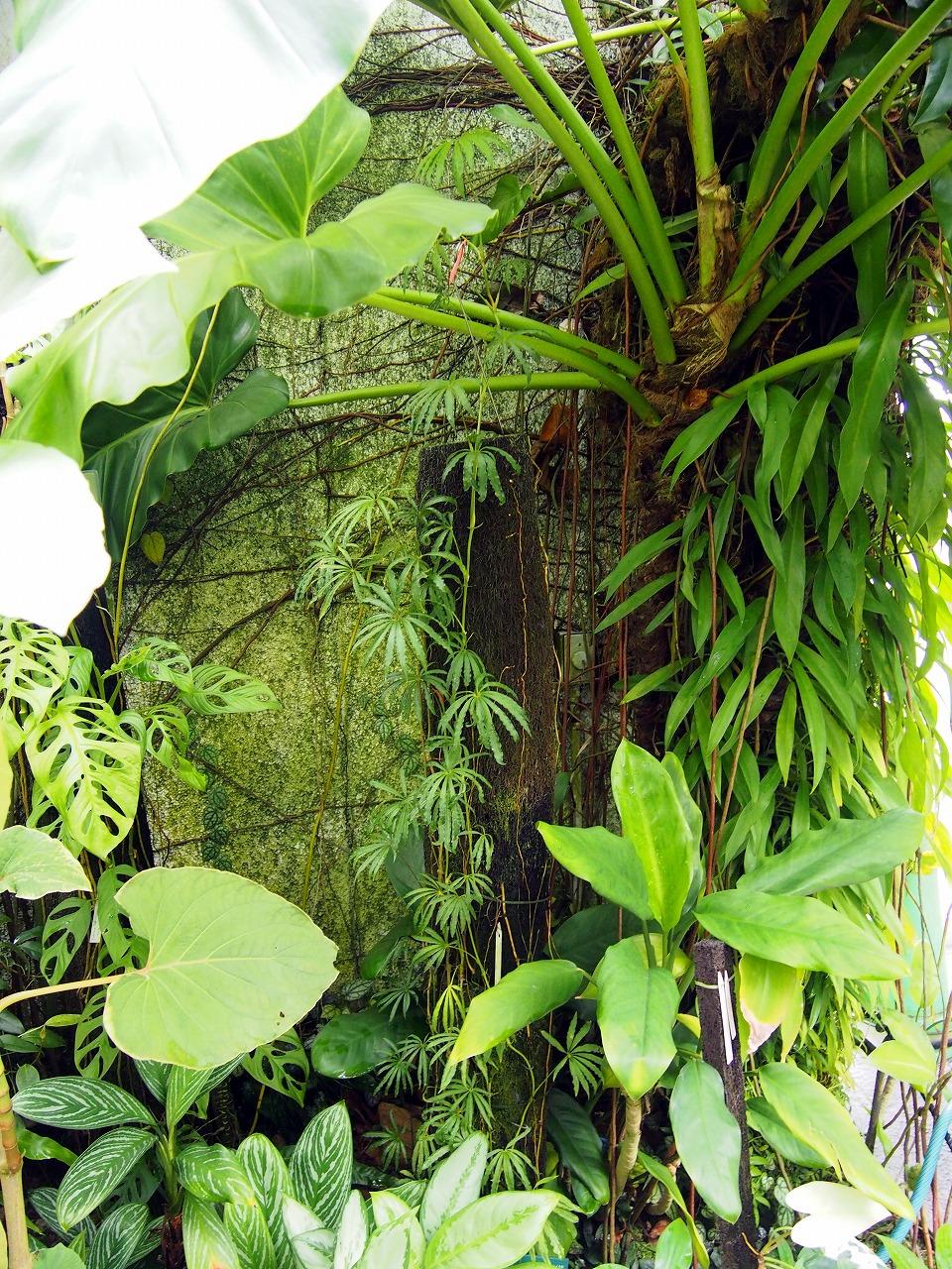 BotanicalGarden96_20141115.jpg