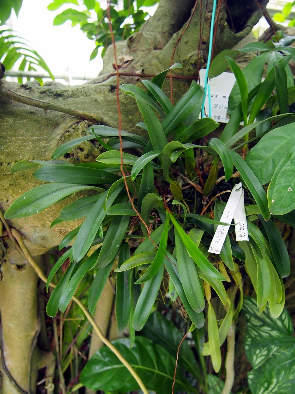 BotanicalGarden97_20141115.jpg