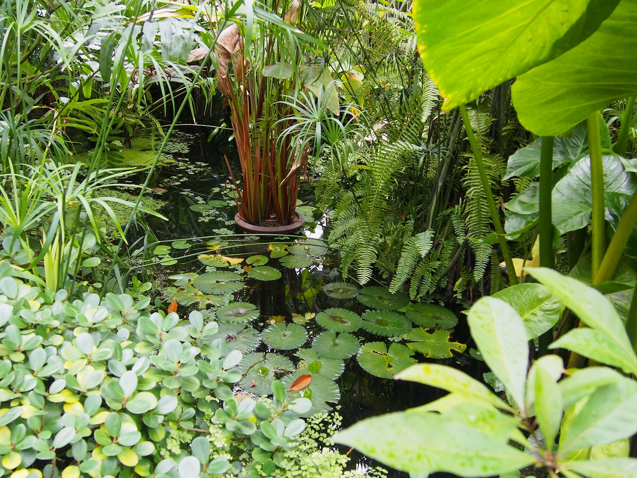 BotanicalGarden98_20141115.jpg