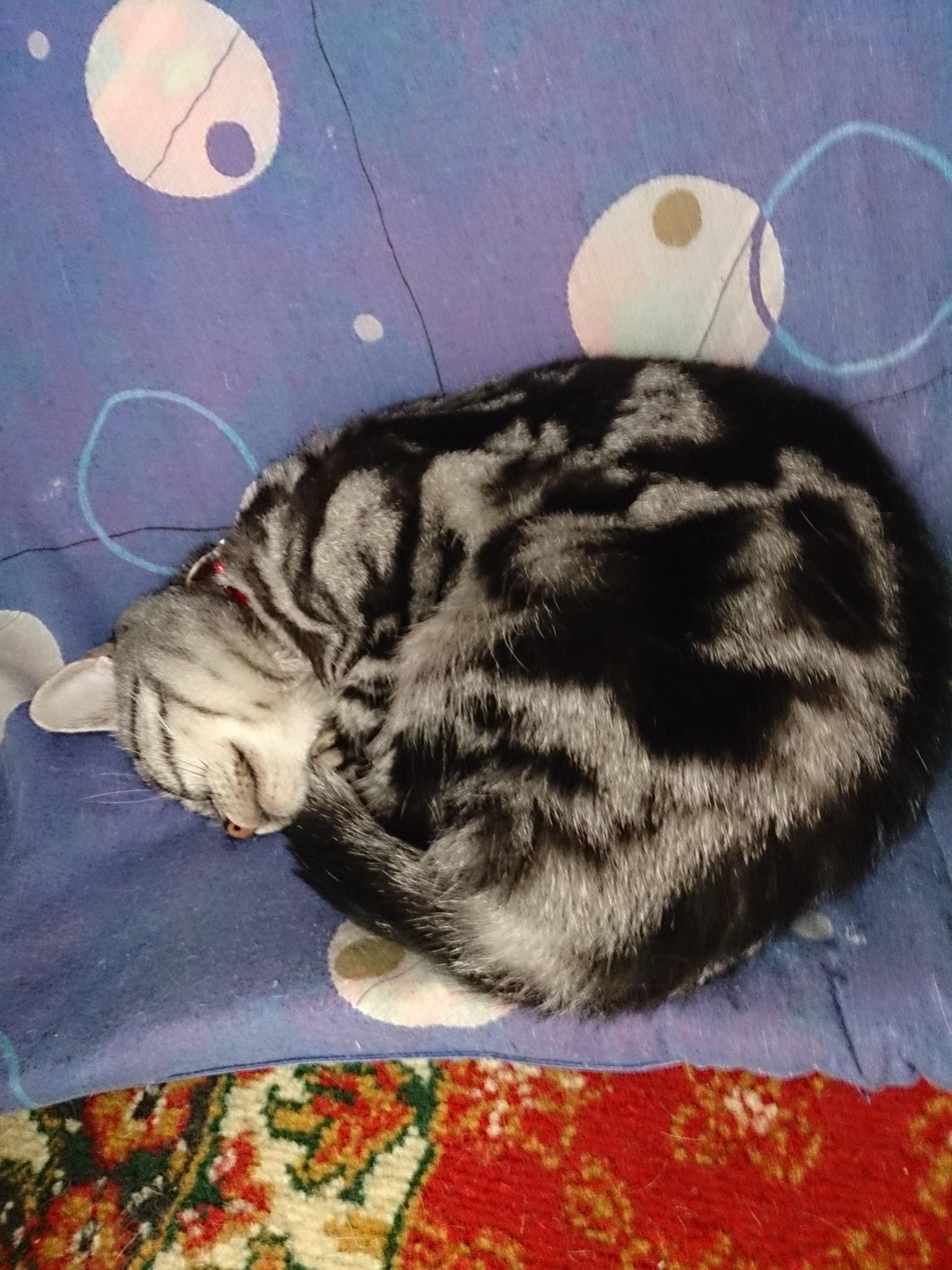 Cat_20141103-01.jpg