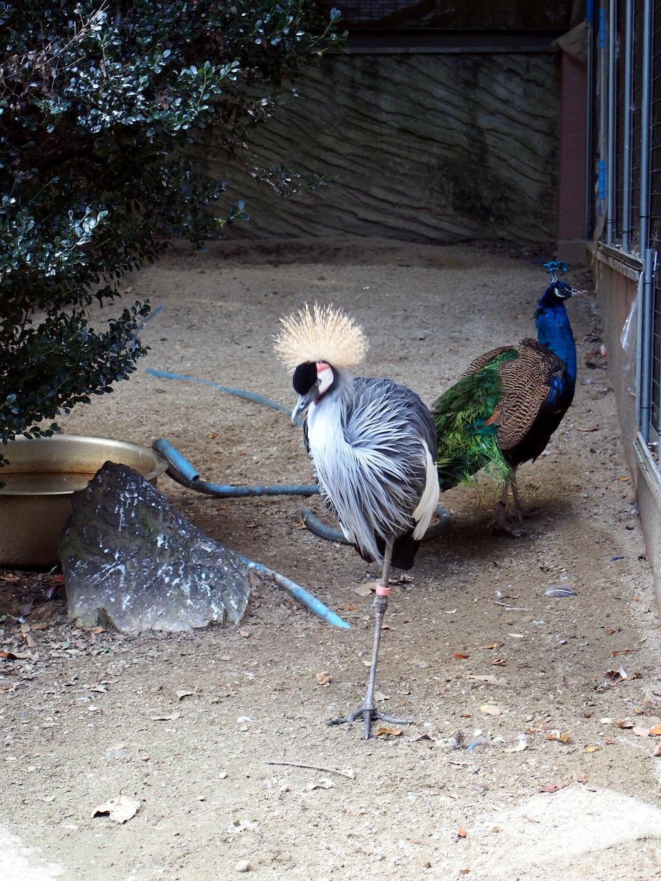 Zoo04_20141115.jpg