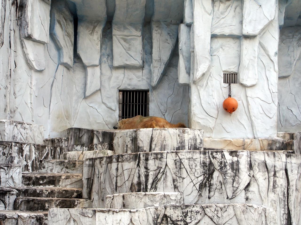 Zoo06_20141115.jpg