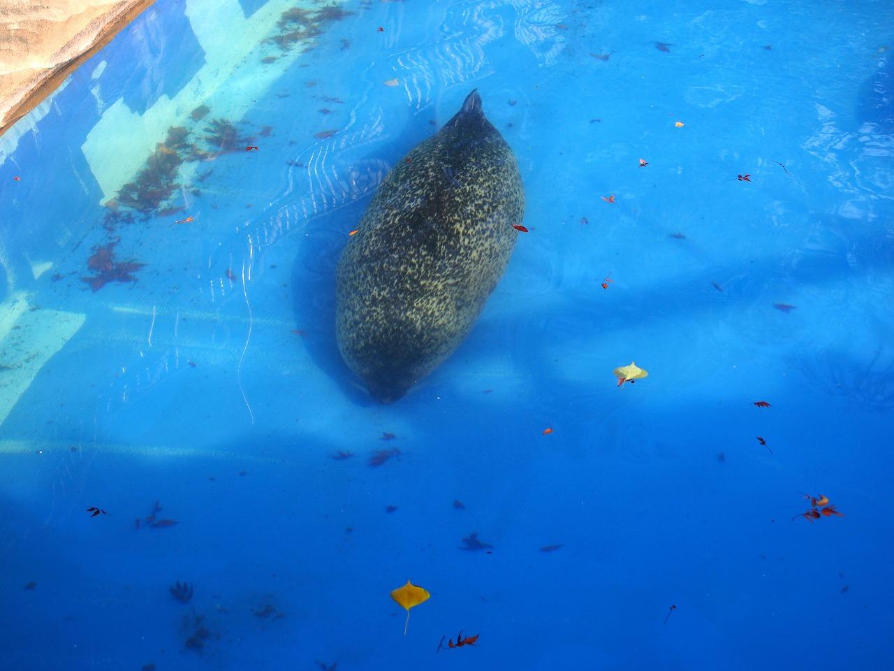 Zoo08-01_20141115.jpg