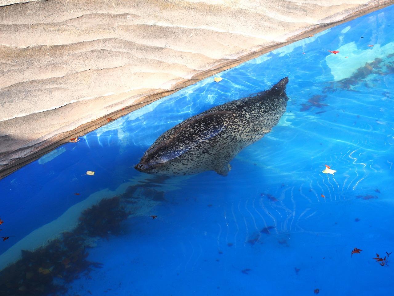 Zoo08-02_20141115.jpg