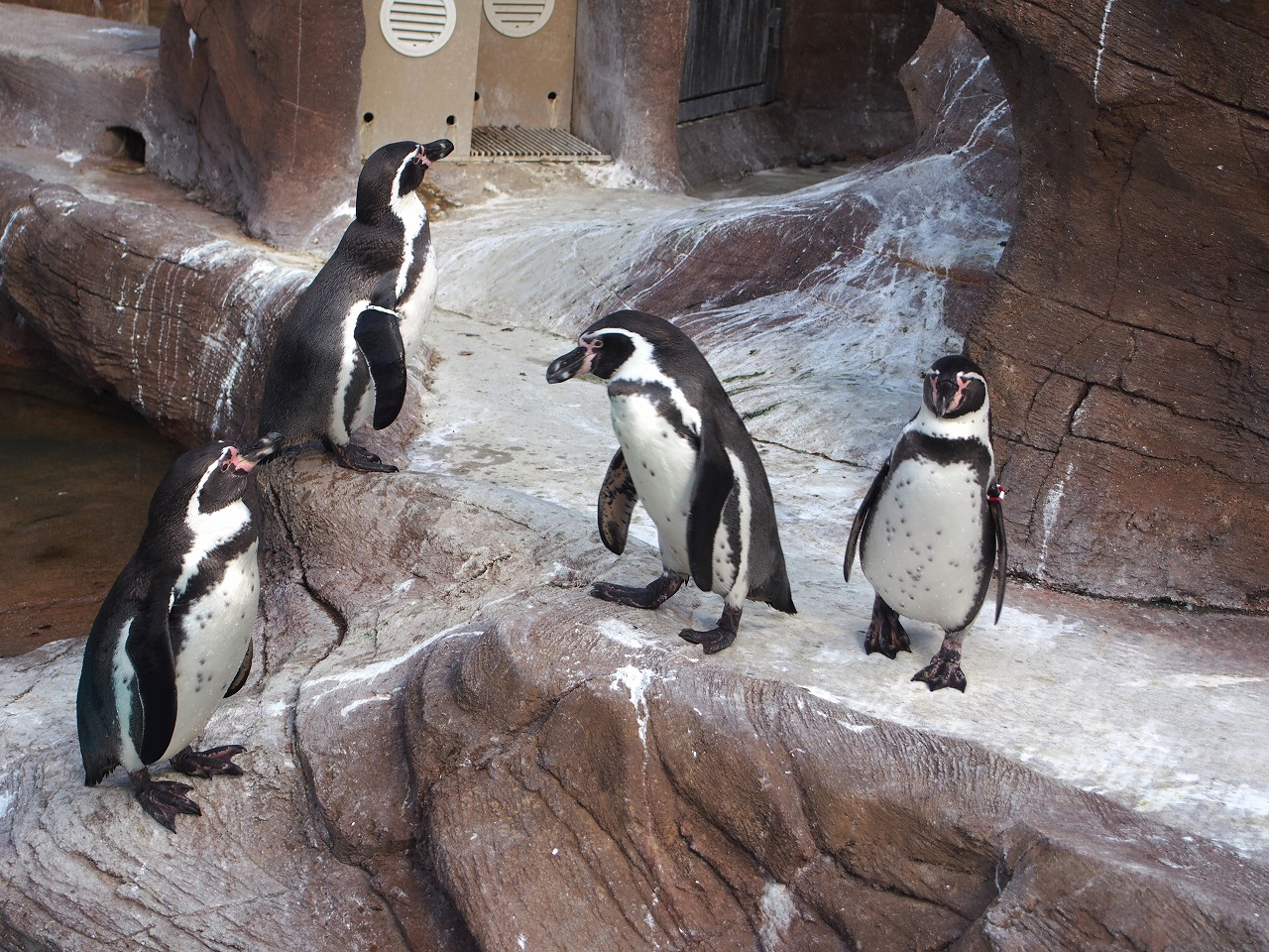 Zoo15_20141115.jpg