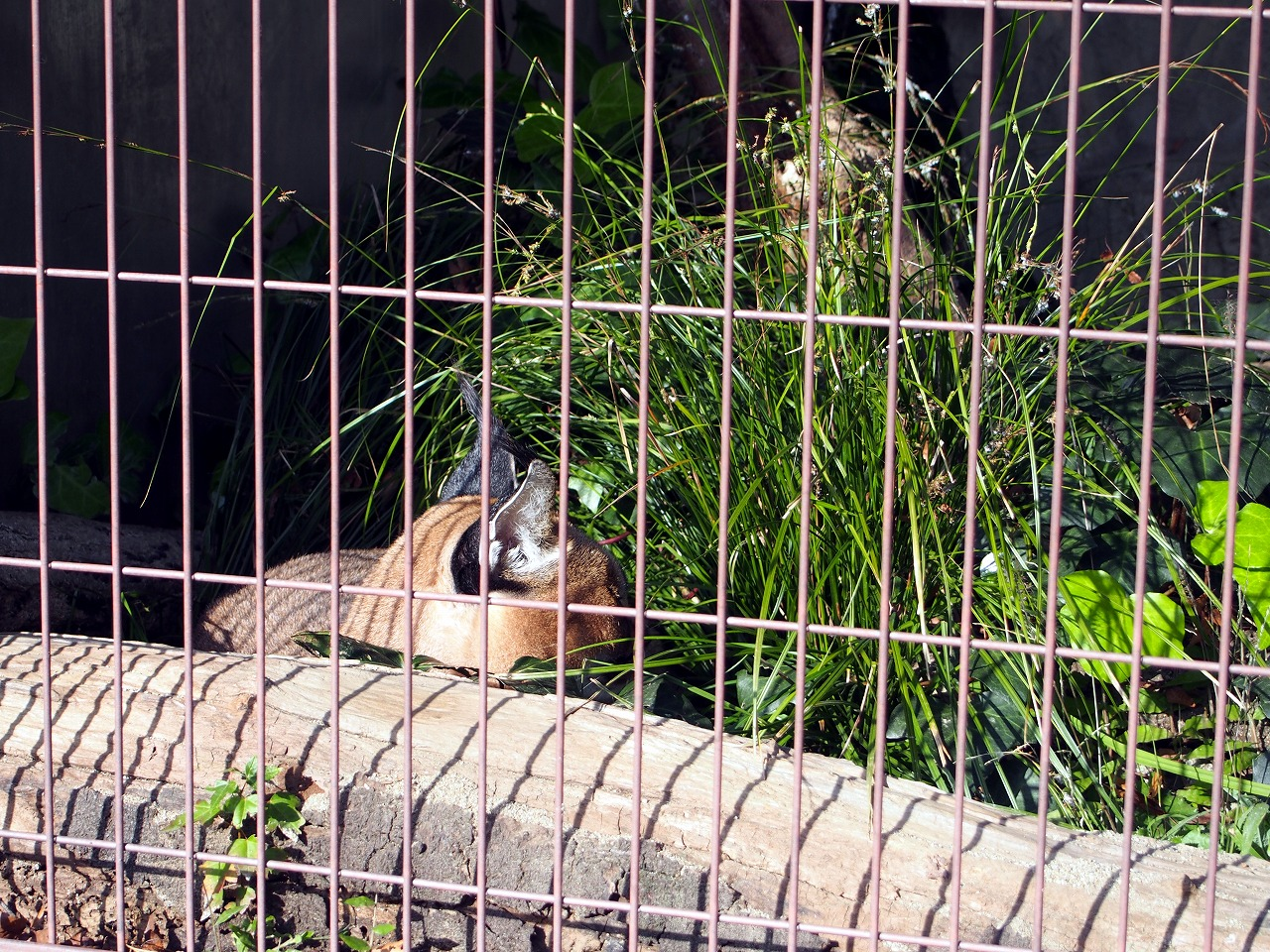 Zoo18_20141115.jpg