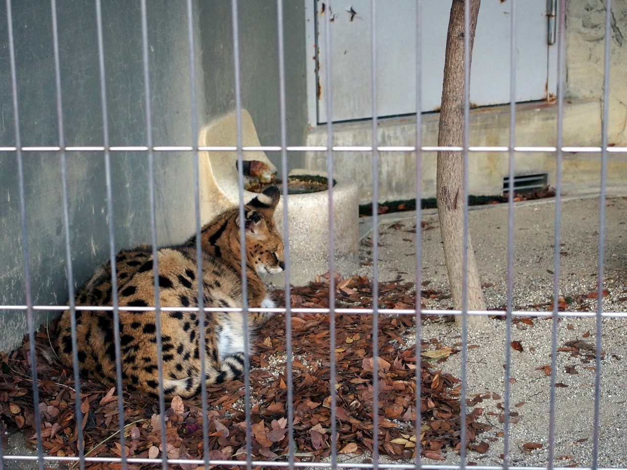 Zoo19_20141115.jpg