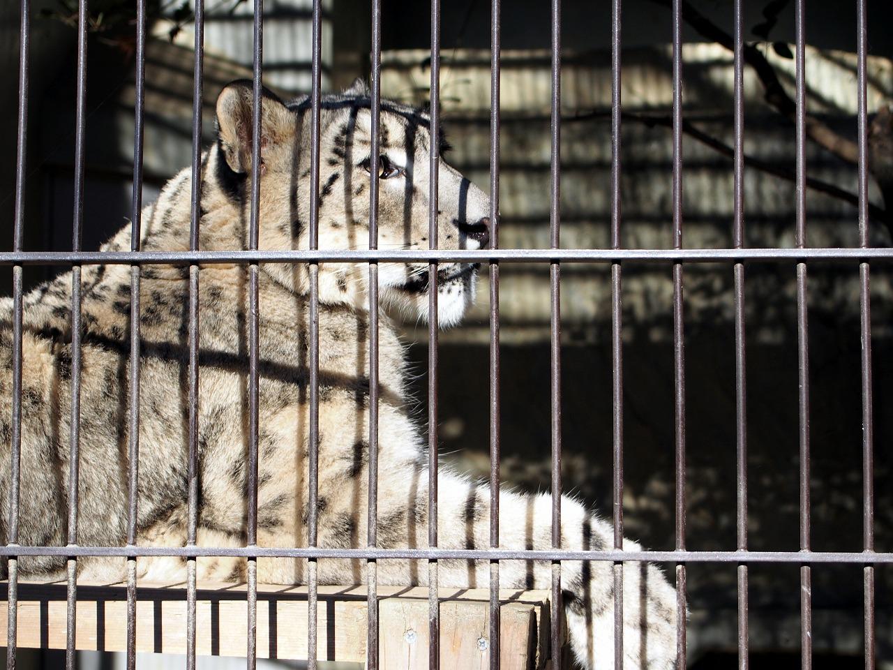 Zoo21_20141115.jpg