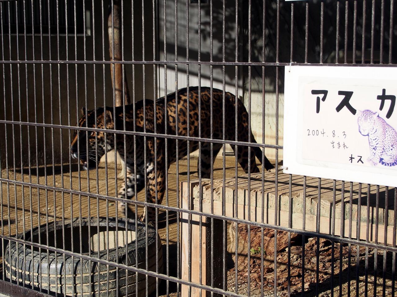 Zoo24_20141115.jpg