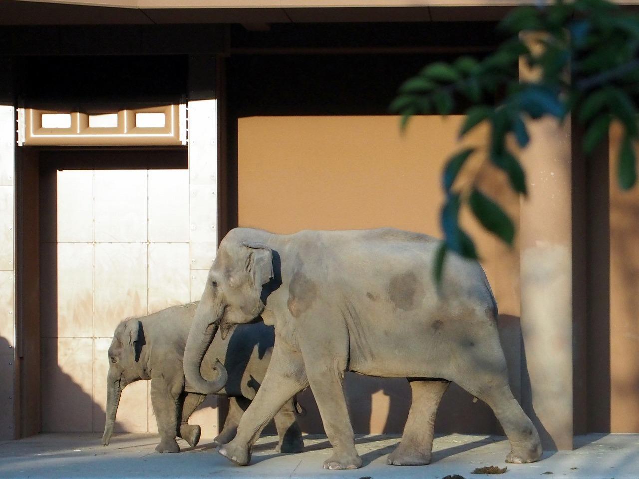 Zoo40_20141115.jpg