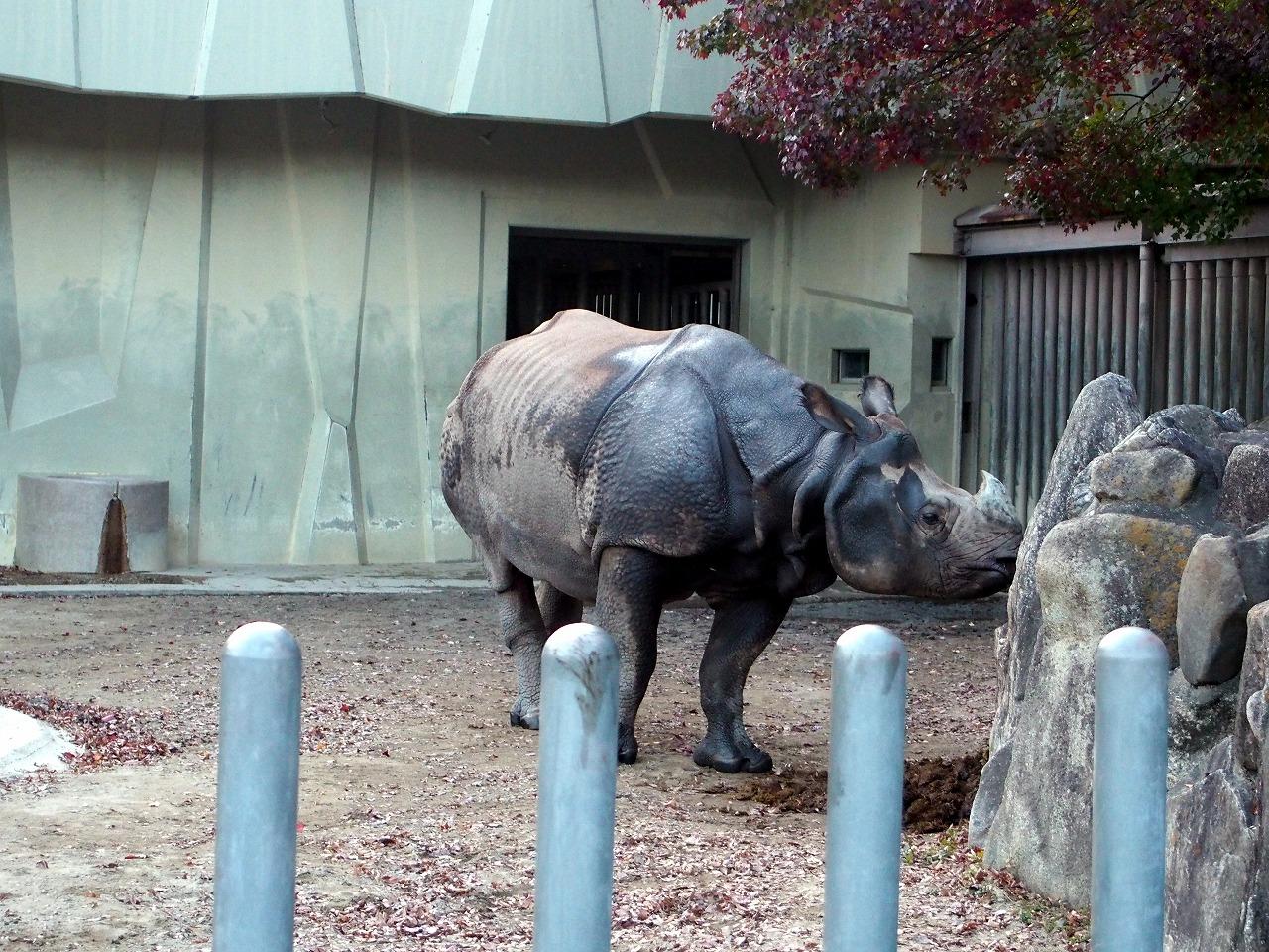 Zoo43_20141115.jpg