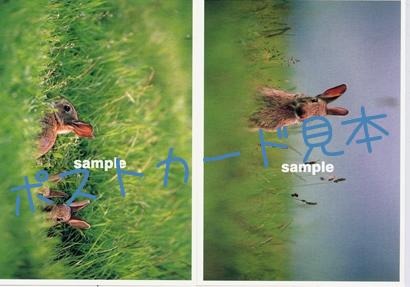 ポストカード商品イメージ