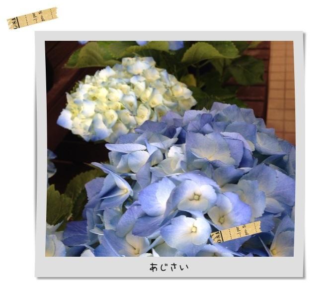 image_20130522133821.jpg