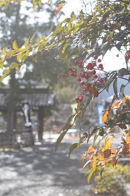 IMG_1692嵯峨広沢12