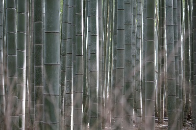 IMG_1734嵯峨竹林2